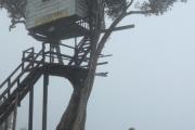 Casa del arbol = tree house!
