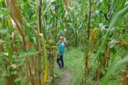 Cami in the Corn Field