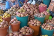 Some of the 3000 Varieties of Potatoes