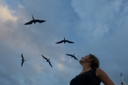Being chased by frigate birds