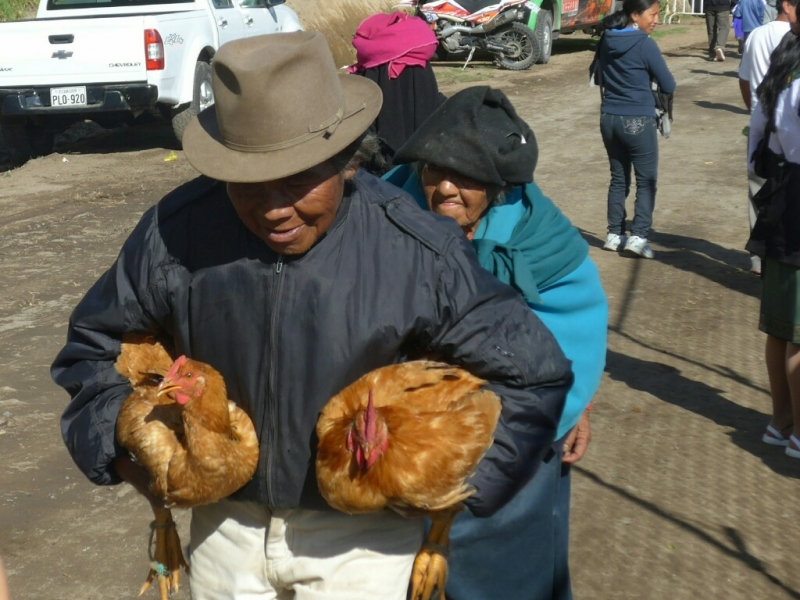 Chickens in tow
