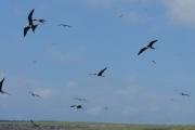 Birds overhead