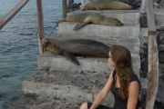Watch out for the sea lions