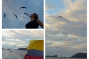 The flying frigates are following the Floreana!