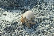 I find hermit crabs pretty darn cute too