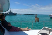 Sean and the pelicans