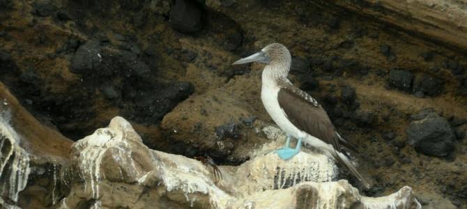 Fernandina Island and Tagus Cove, Galapagos
